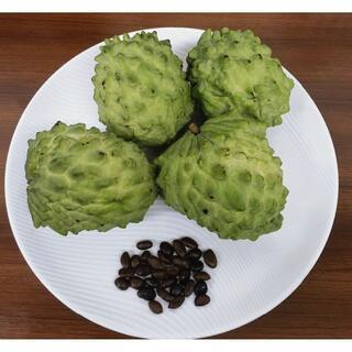 沖縄産 高級フルーツ アテモヤの種子 30粒(フルーツ)