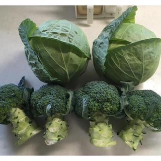 専業農家直送【超減農薬の春キャベツ&ブロッコリー】ダンボール大サイズ入るだけ(野菜)