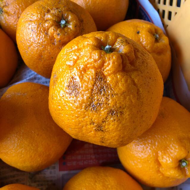 不知火B級品 5キロ 即購入OK 食品/飲料/酒の食品(フルーツ)の商品写真