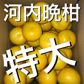 愛媛県産河内晩柑特大8キロ×2(フルーツ)