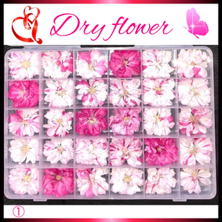 💐花材 弁慶桃 ( 八重斑入り 梅の花より大きめ ) ドライフラワー
