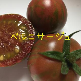トマト グリーンゼブラ 種(その他)
