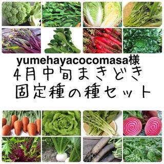 yumehayacocomasa様 ★伝統野菜★4月中旬まきどき固定種の種セット(野菜)