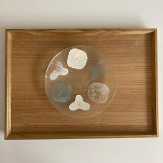 八木麻子 ガラス プレート wreath リース