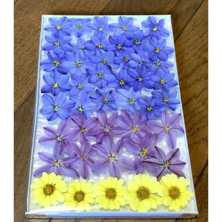 31   今日から銀の紫陽花 春の100円お値引きセール始まりました‼️(ドライフラワー)