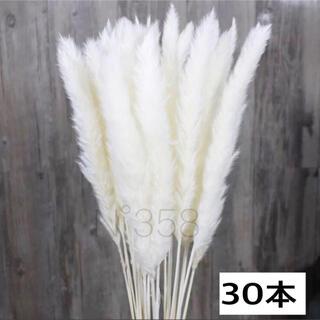 ドライフラワー インテリア パンパスグラス30本 ハンドメイドスワッグ花材 北欧(ドライフラワー)