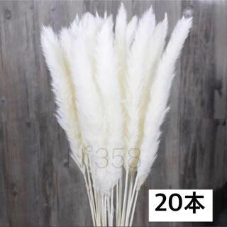 ドライフラワー インテリア パンパスグラス20本 ハンドメイドスワッグ花材 北欧(ドライフラワー)
