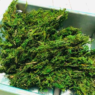 苔Lサイズ80グラム フェイクグリーン乾燥 観葉植物アレンジメント用(ドライフラワー)