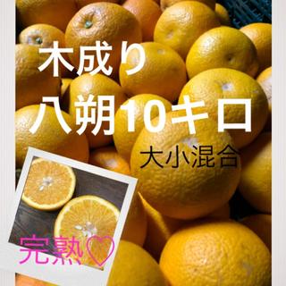 和歌山県産有田の木成り八朔大小混合キロ(フルーツ)