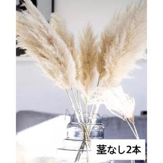 ※スプレー、乾燥済み※パンパスグラス ナチュラル茎なし 穂のみ 限定2本(ドライフラワー)