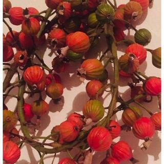 【石垣島産】 月桃の実・乾燥 200g(茶)