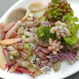 ⭐多肉植物葉さしセット(その他)