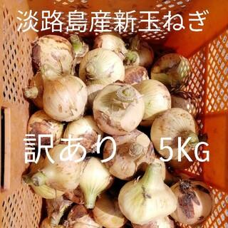 ☆訳あり5Kg☆淡路島新玉ねぎ たまねぎ 玉葱(野菜)