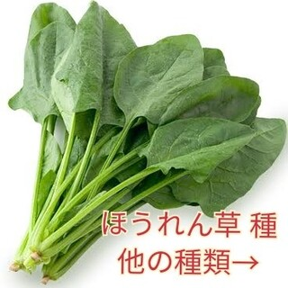 野菜種☆ほうれん草☆変更→スナップエンドウ ミニトマト ルッコラ エゴマ 人参(野菜)