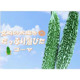 栄養満点☝️新鮮ゴーヤ!!4本セット(野菜)