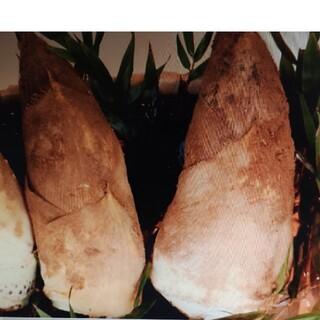 タケノコ❤️朝採り4.8キロ前後(野菜)