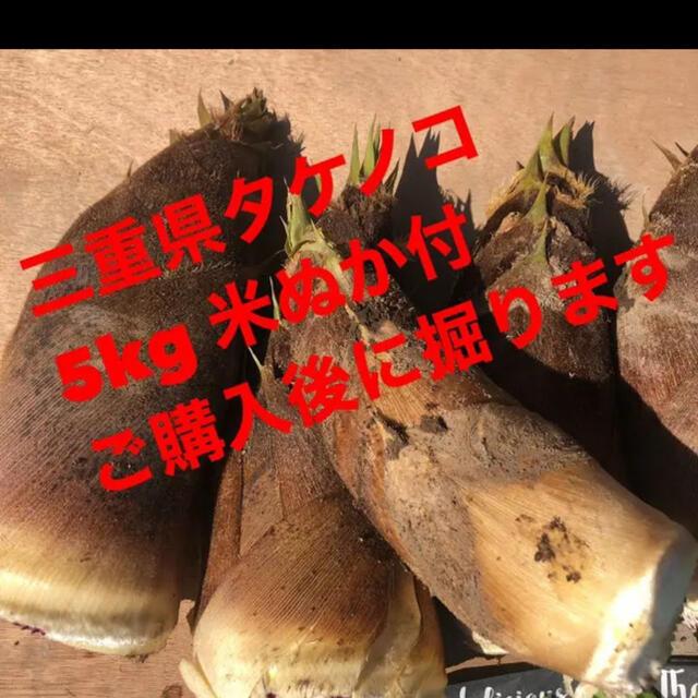 たけのこ 食品/飲料/酒の食品(野菜)の商品写真