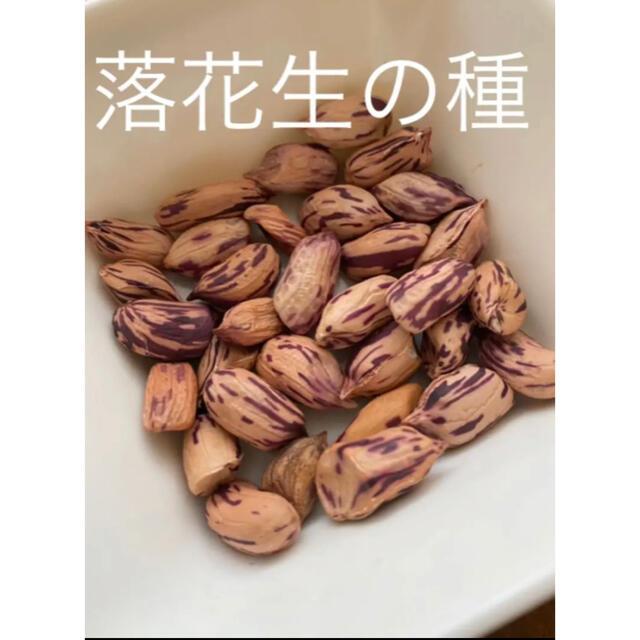 マーブル しましま 落花生の種10粒 食品/飲料/酒の食品(野菜)の商品写真