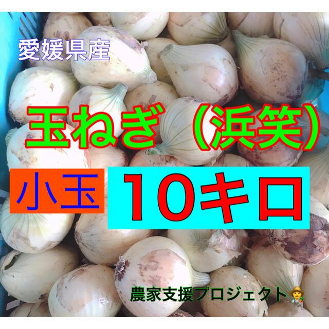 玉ねぎ10キロ ! 食品/飲料/酒の食品(野菜)の商品写真