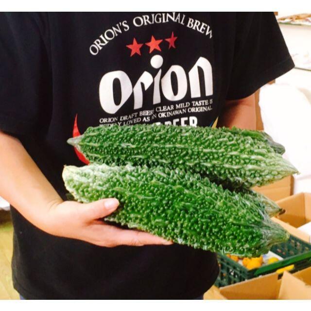 残り僅か!沖縄本島産 スーパージャンボ ゴーヤーの苗 2鉢セット♪ 食品/飲料/酒の食品(野菜)の商品写真
