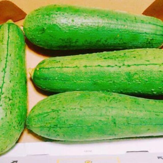 沖縄本島産 ナーベラー(食用へちま)の苗 2鉢セット 食品/飲料/酒の食品(野菜)の商品写真
