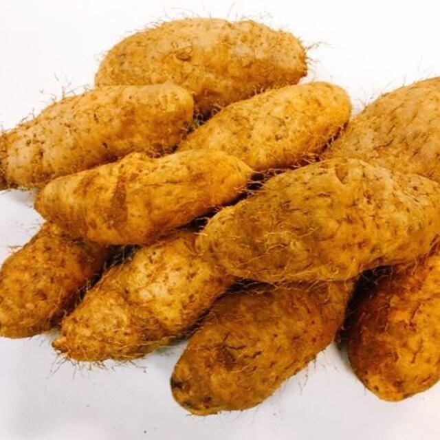 最終!!沖縄在来種 自然薯 沖縄本島北部産 クーガ芋1.5kg 食品/飲料/酒の食品(野菜)の商品写真
