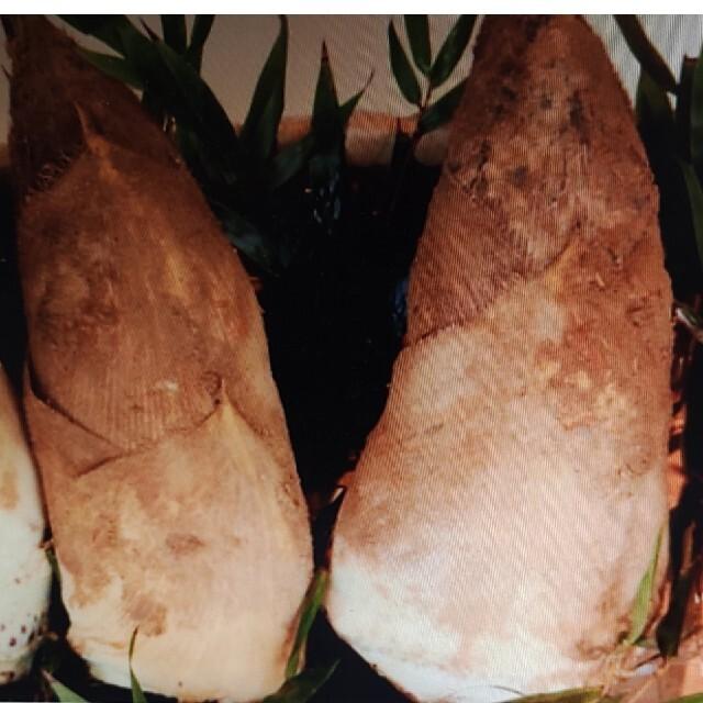 タケノコ❤️朝採り4.8キロ前後 食品/飲料/酒の食品(野菜)の商品写真
