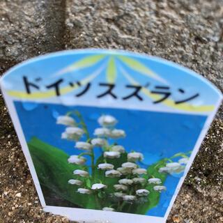 ドイツスズラン苗&日本スズラン(その他)