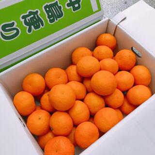 愛媛県産 中島便り 高級みかん カラマンダリン(フルーツ)