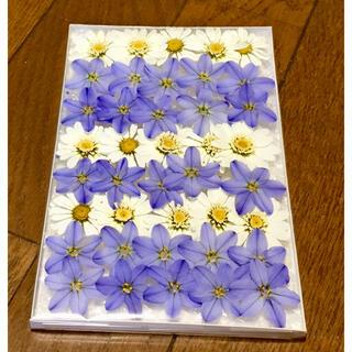 36  銀の紫陽花  春の100円お値引きセール始まりました‼️(ドライフラワー)