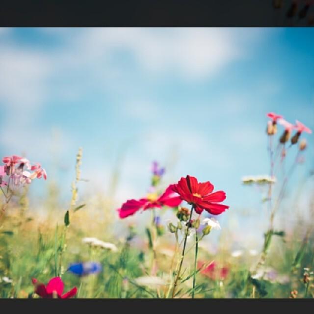 CHANEL(シャネル)の【かとう様ご専用】CHANEL シャネル ピアス レディースのアクセサリー(ピアス)の商品写真