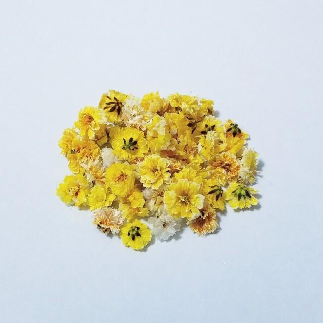 かすみ草のドライフラワー ハンドメイドのフラワー/ガーデン(ドライフラワー)の商品写真