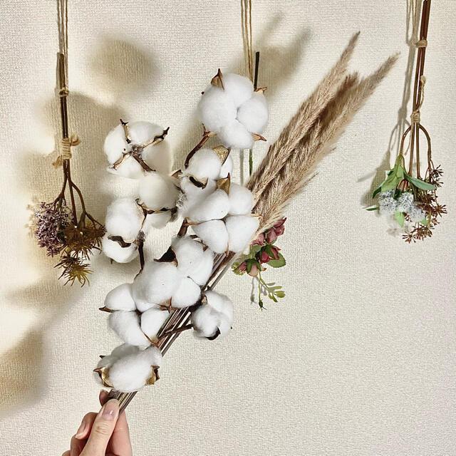 パンパスグラス ブラウン5本 コットンフラワーホワイト1本 送料込み 観葉植物 ハンドメイドのフラワー/ガーデン(ドライフラワー)の商品写真