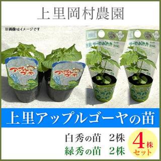 41361【n4H2R2】送料込!寅さんのアップルゴーヤ苗白緑4株セット(野菜)