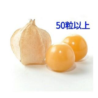 食べれるほおずき種 ビッグオレンジ たねの販売です(その他)