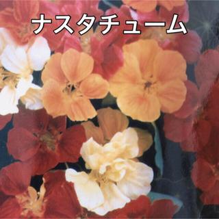 ナスタチューム 金蓮花 種(その他)