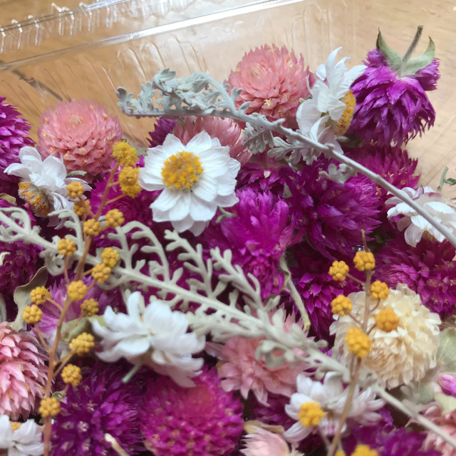 ドライフラワー花材詰め合わせセンニチコウ ハンドメイドのフラワー/ガーデン(ドライフラワー)の商品写真
