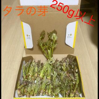 !今旬のタラの芽‼︎    !250g以上!(野菜)