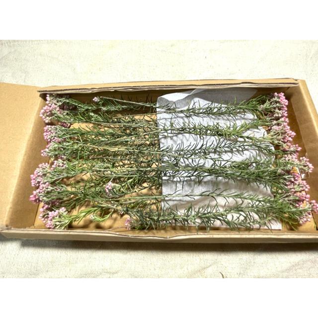 A ライスフラワー  ❁⃘ ドライフラワー ハンドメイドのフラワー/ガーデン(ドライフラワー)の商品写真