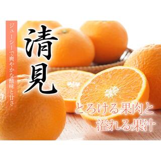 綺麗!甘い!ジューシー!【清美タンゴール】 赤秀品 3Lサイズ 9kg(フルーツ)