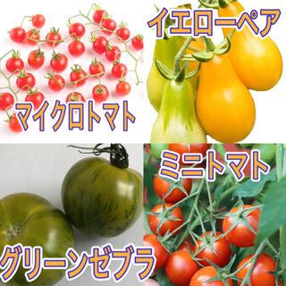 トマトのたね4種セット マイクロトマト ミニトマト グリーンゼブラ イエローペア(その他)