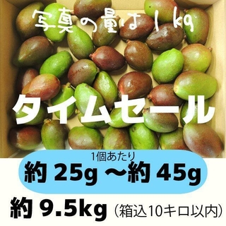 [青10-4]約9.5キロ グリーンマンゴー 青マンゴー 加工用 マンゴー(フルーツ)
