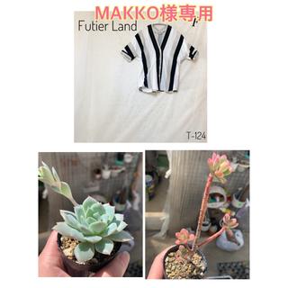 MAKKO様専用   多肉植物 紅稚児 抜き苗(その他)