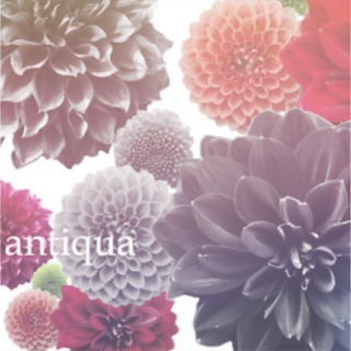 antiqua -  antiqua/pattern torso otona配色コクーンニット