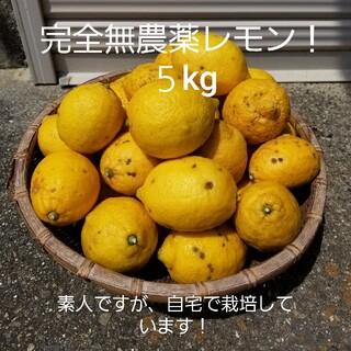 完全無農薬レモン5kg!(フルーツ)