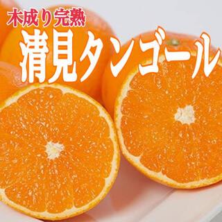 味本位木成り栽培【清美タンゴール】4Lサイズ 9kg ※味センサー選別済み!(フルーツ)