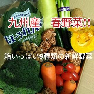九州産新鮮な野菜が入荷しました!!(野菜)