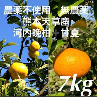 農薬不使用 無農薬 甘夏3.5kg➕河内晩柑3.5kg  計7kg 熊本天草産(フルーツ)