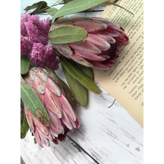 花材 プロテア ピンクアイス 2本セット ピンクスターチス付き ドライフラワー(ドライフラワー)