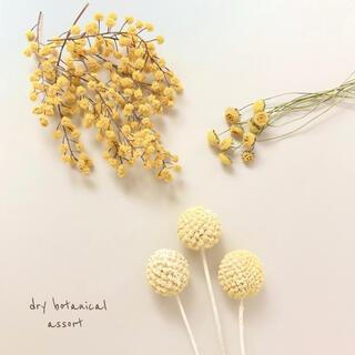 ドライボタニカル / 黄色の花・アソート♩ 花材  ハンドメイド(ドライフラワー)